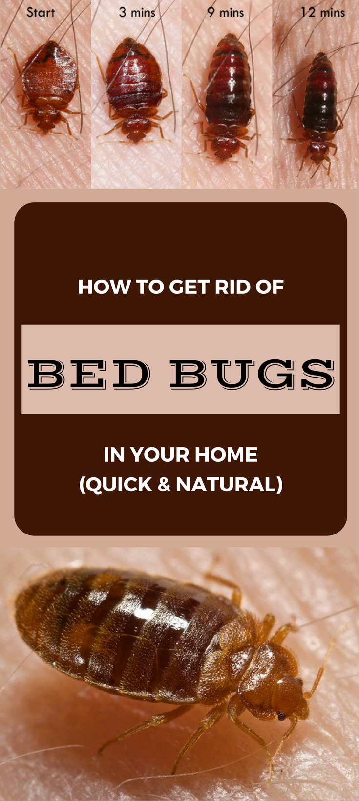 How To Get Rid Of Bed Bugs Using Rubbing Alcohol
