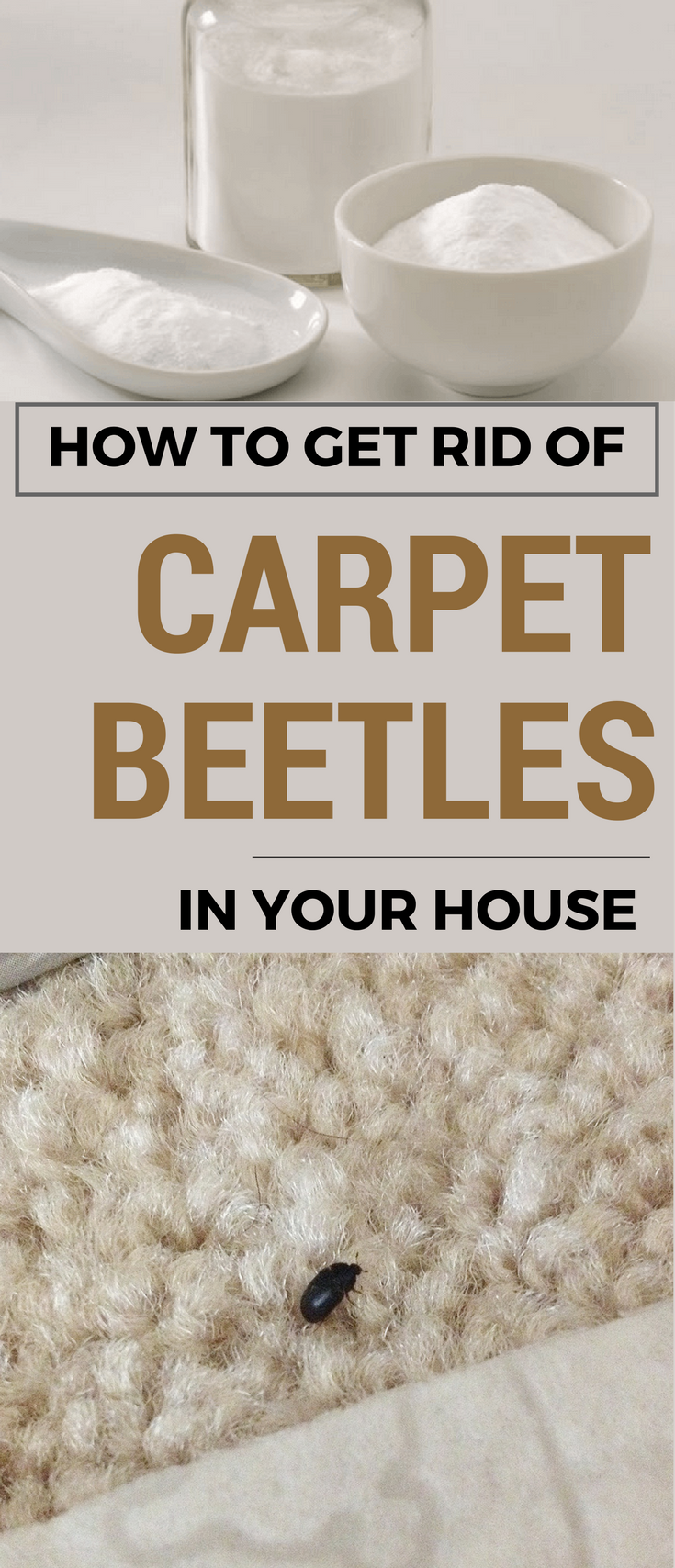 How To Get Rid Of Carpet Beetles In Your House