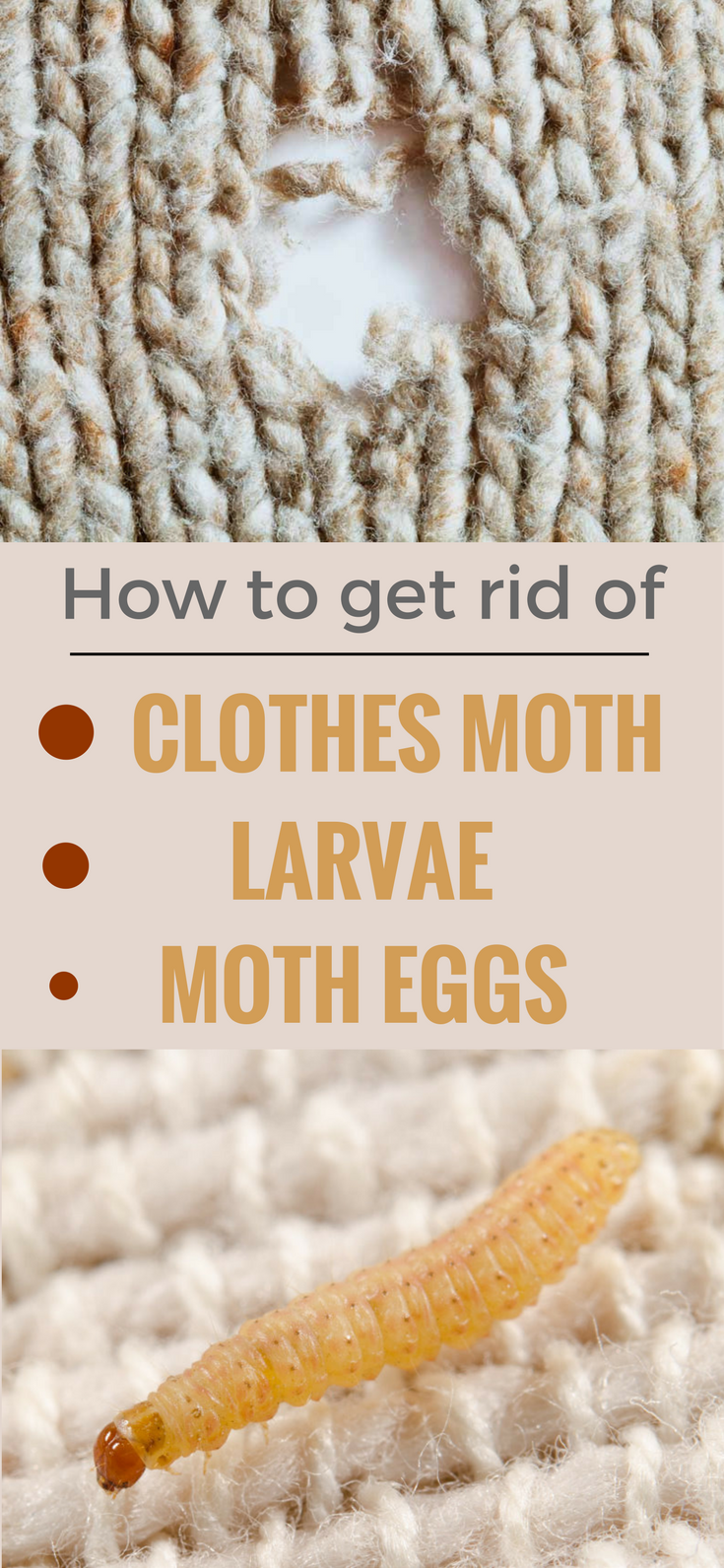 Striking How To Get Rid Of Clothes Moths And Carpet