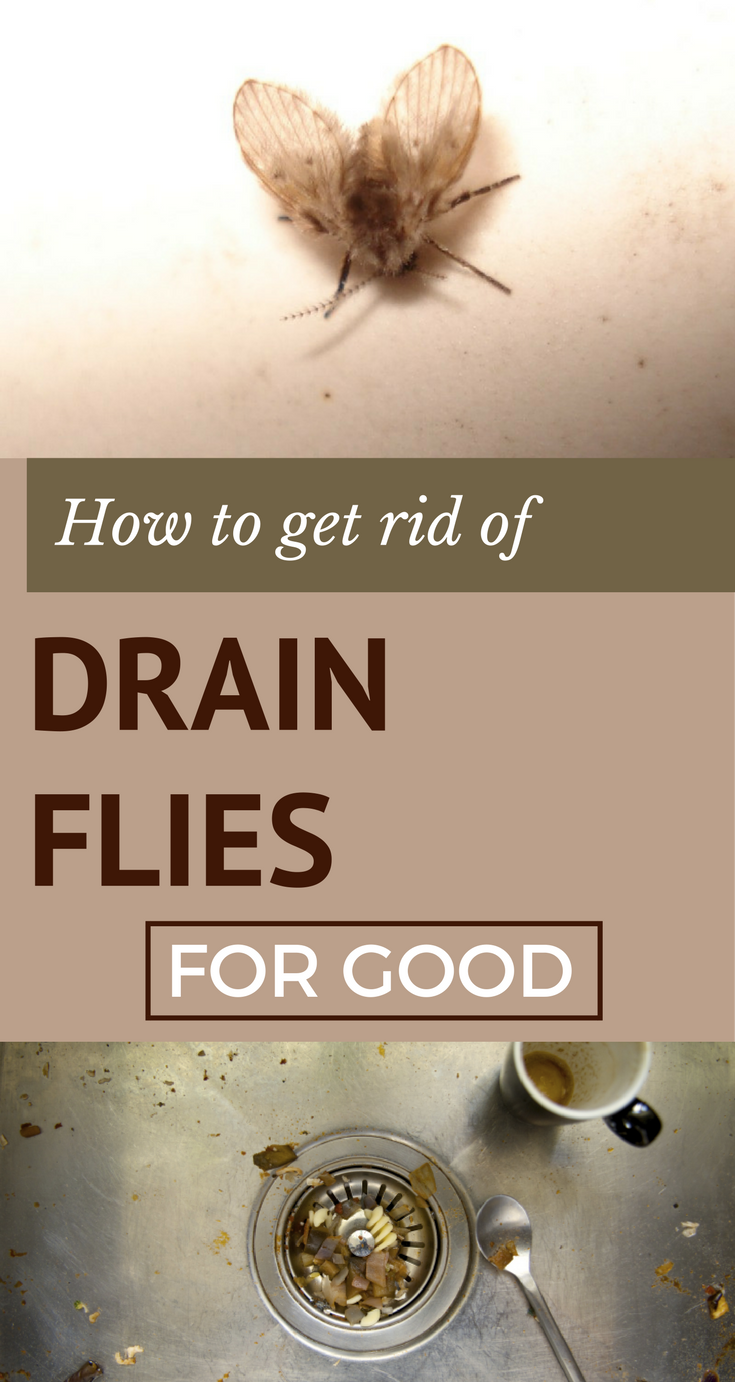 How To Get Rid Of Sewer Smell In Your House: How To Get Rid Of Drain Flies For Good