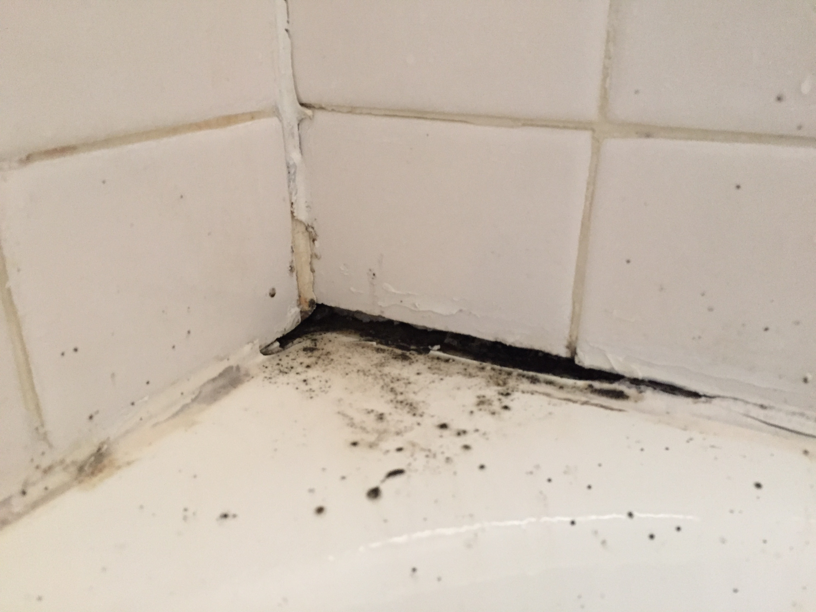 The most effective methods to kill black mold naturally for Clean mold in bathroom