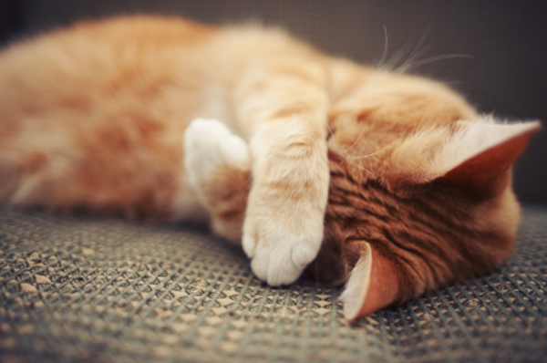 How to Remove Cat Urine Odor in Your House