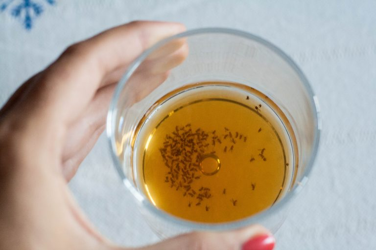 4 Effective Methods to Get Rid of Fruit Flies