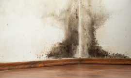 Homemade Natural Spray To Remove Mold On Walls Once And For All
