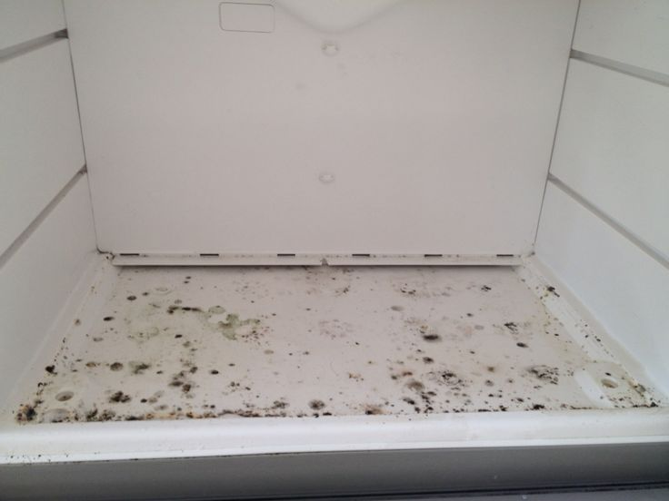 Quick Trick To Remove Any Trace Of Black Mold Spore Inside The Freezer