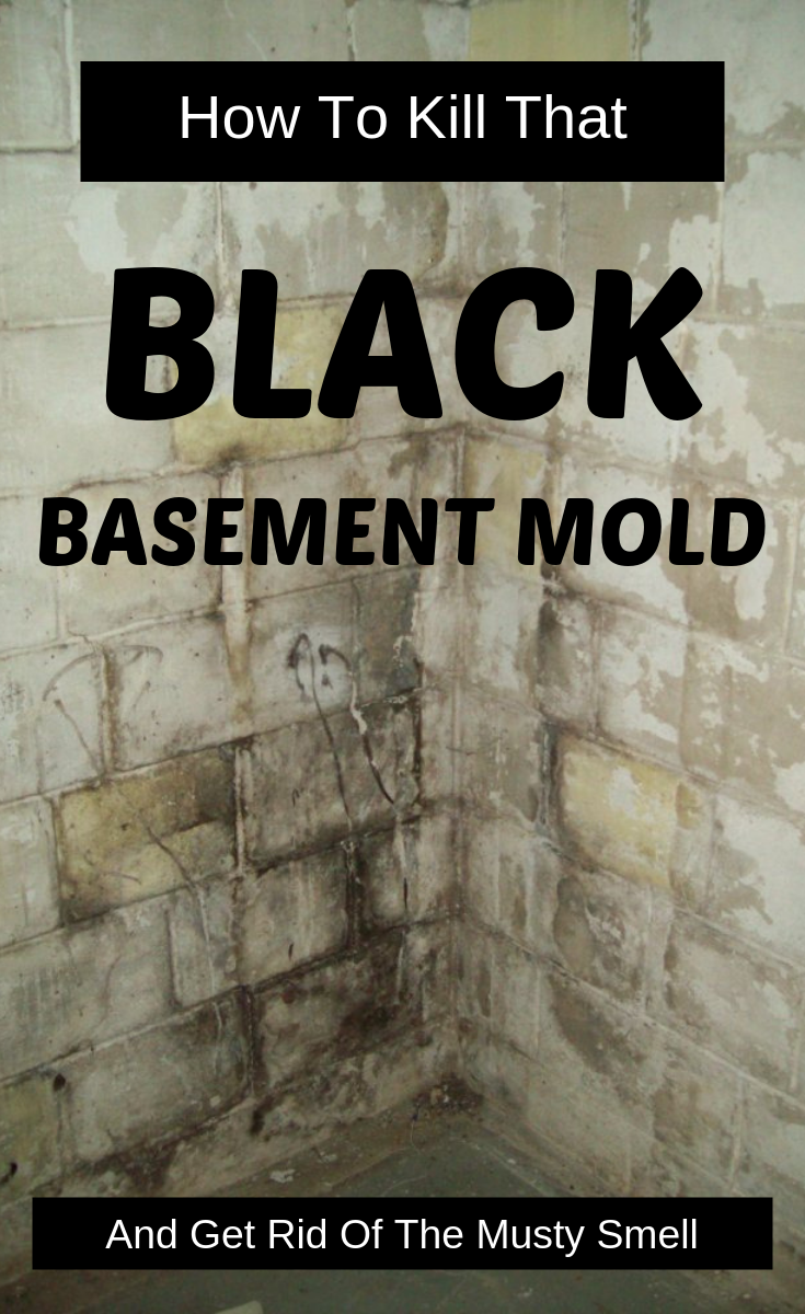 How To Kill That Black Basement Mold And Get Rid Of The ...